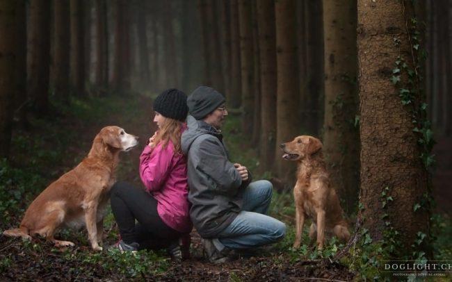 Photographie couple chiens