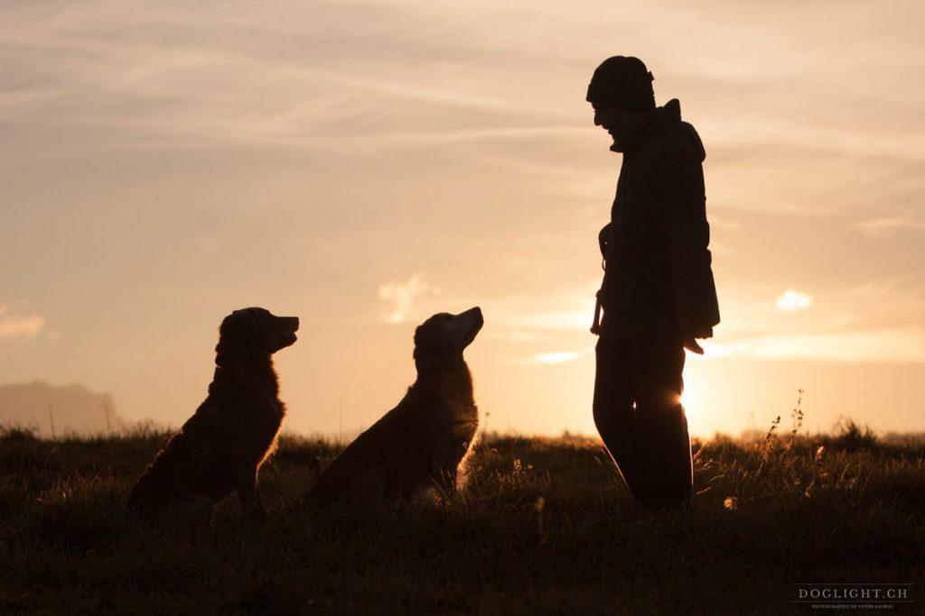 Au coucher du soleil chien et maître