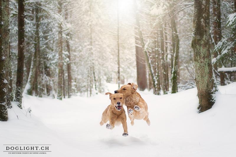 Chiens qui court dans la neige