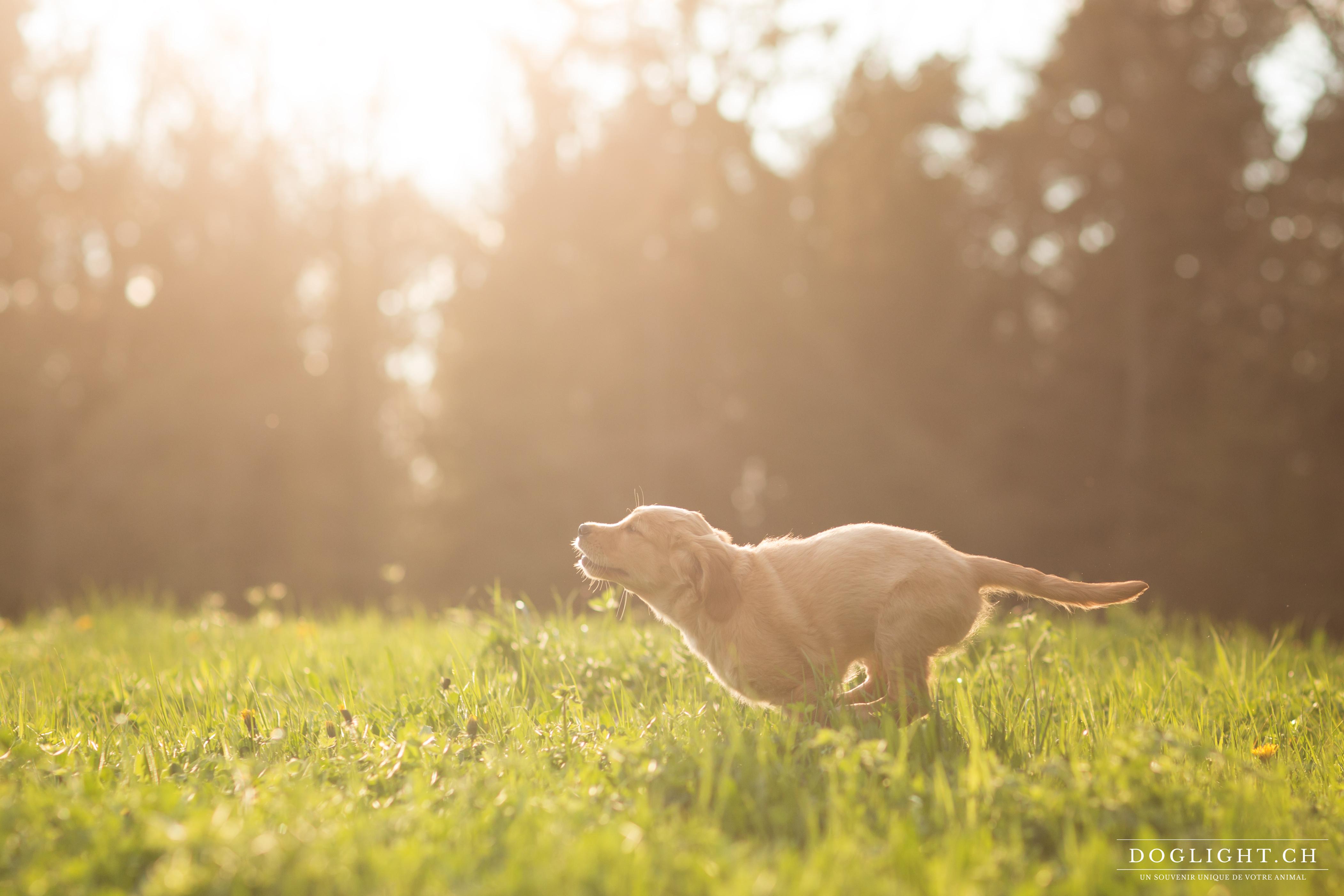 Interview Cabinet vétérinaire Equilibre – Vétérinaire à domicile en Suisse Romande