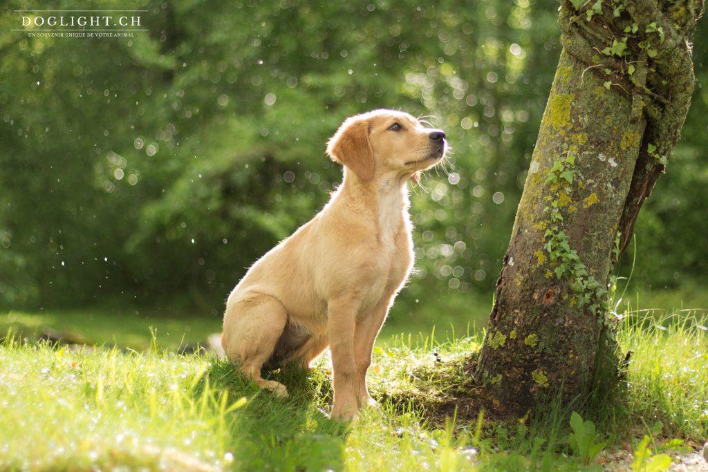 Pluie et soleil, le mixte parfait pour la photo de chien