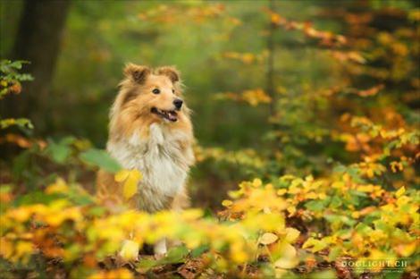 Photo shetland beige en automne