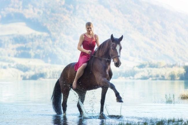 Photo cheval dans l'eau