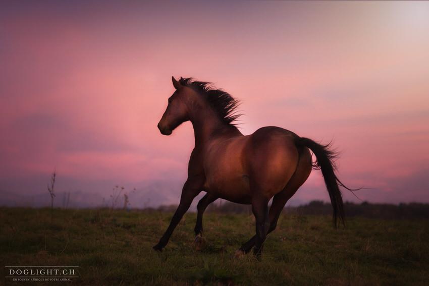 Photo cheval france avec lumière d'hiver