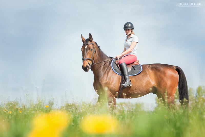Photographe cheval printemps champs fleur morges