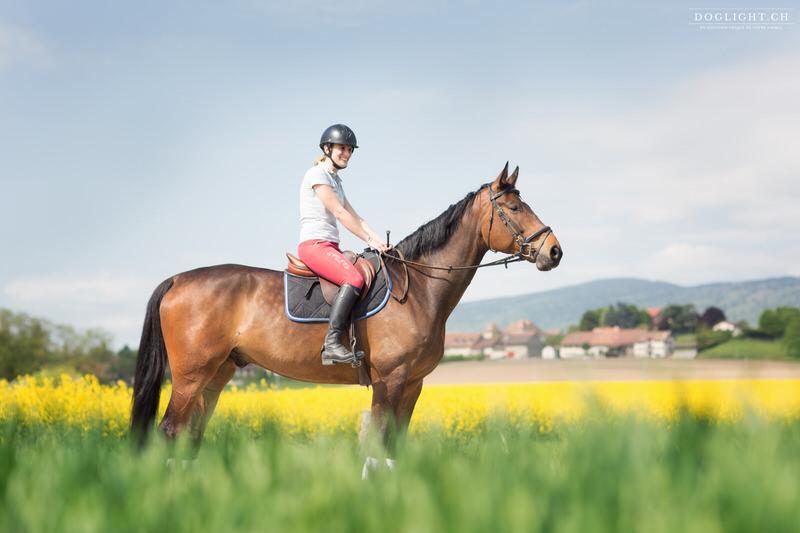 Cheval devant champs de Colza Morges