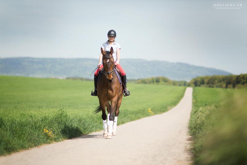 Séance photo cheval chemin de campagne sévery