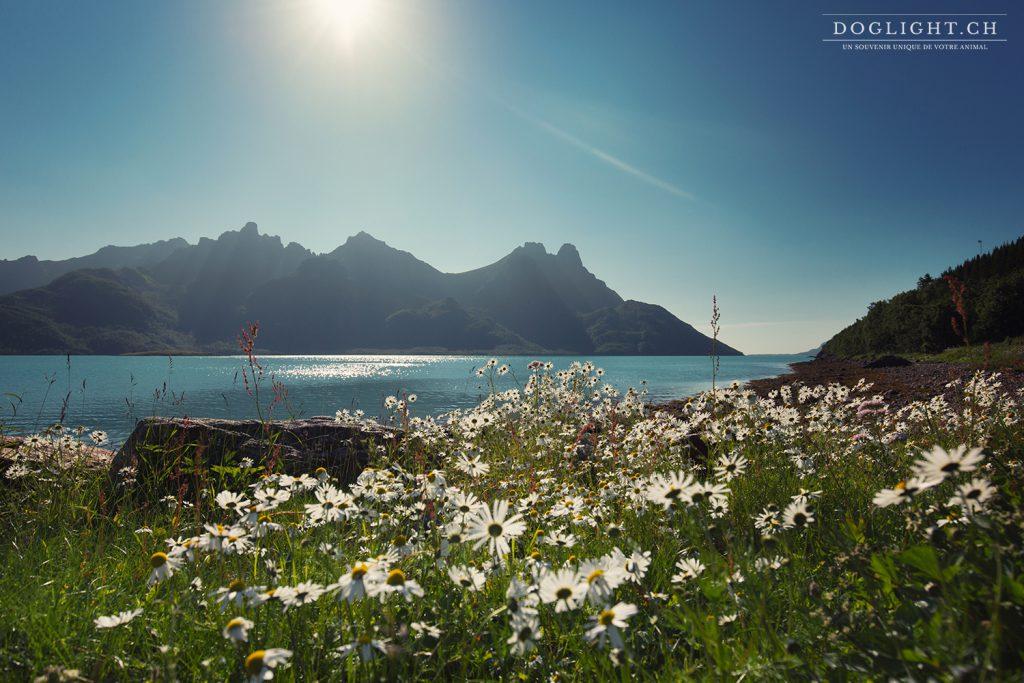 îles Versteralen en Norvège