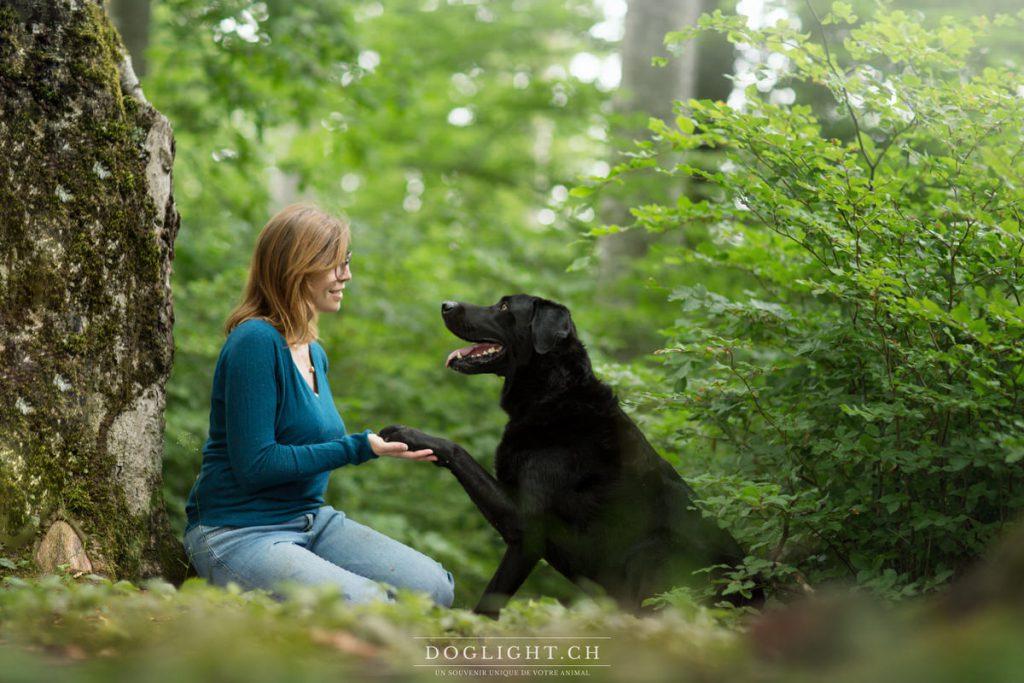Labrador noir qui donne la patte