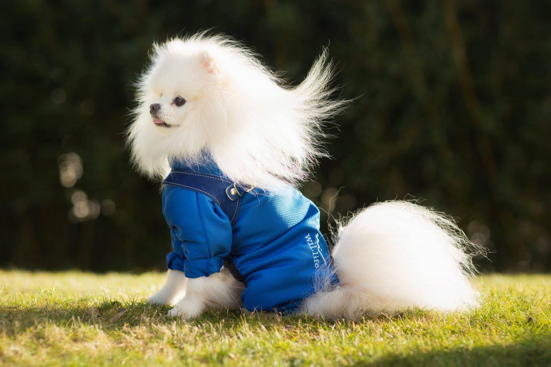 Manteau anti-inflammatoire pour chien