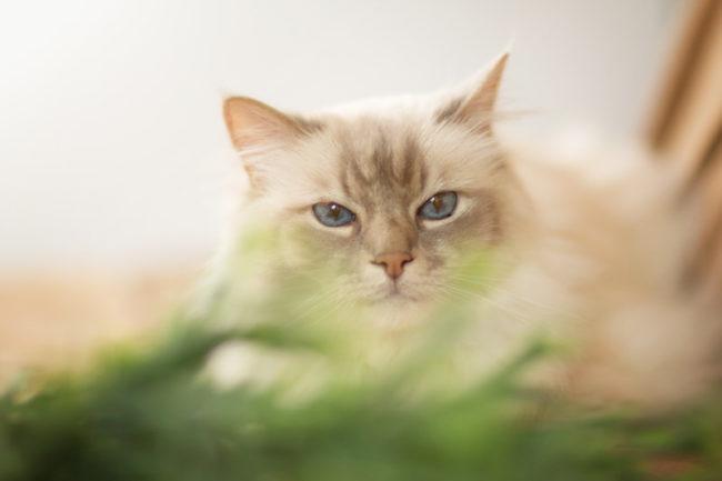 Portrait chat derrière plante