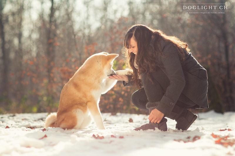 Akita Inu donne la patte, complicité dans la neige