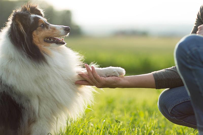 Interview Medi-Vet, la nouvelle clinique vétérinaire en Suisse Romande