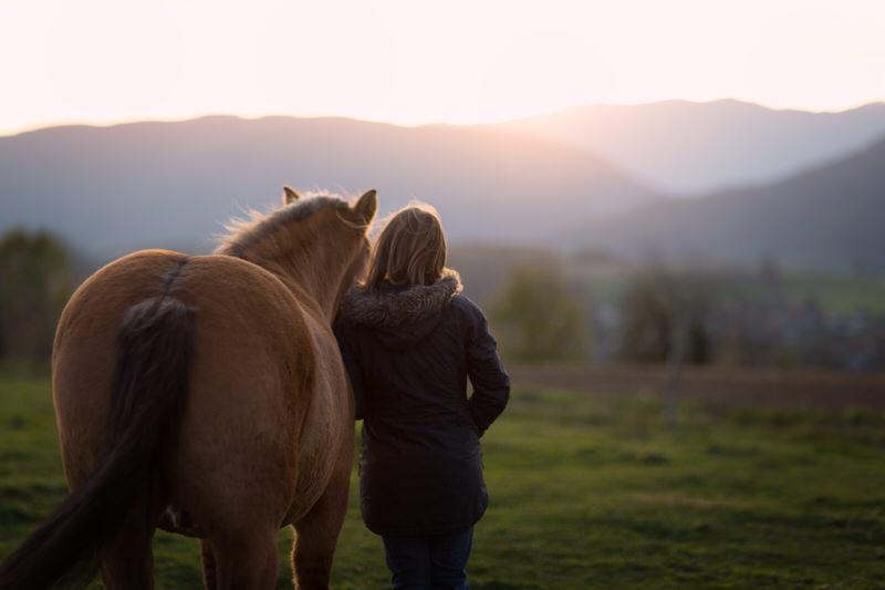 Photo cheval lumière hivernale