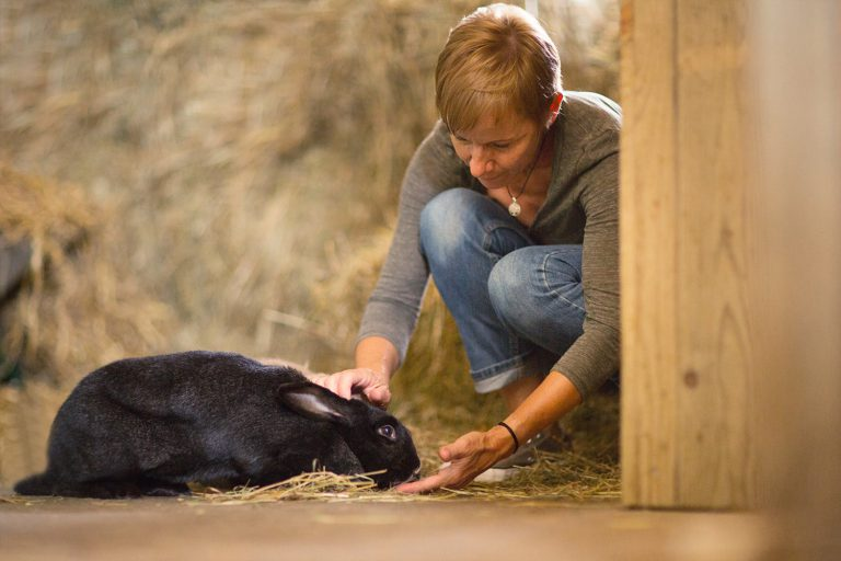 Kinésiologue pour animaux lapin