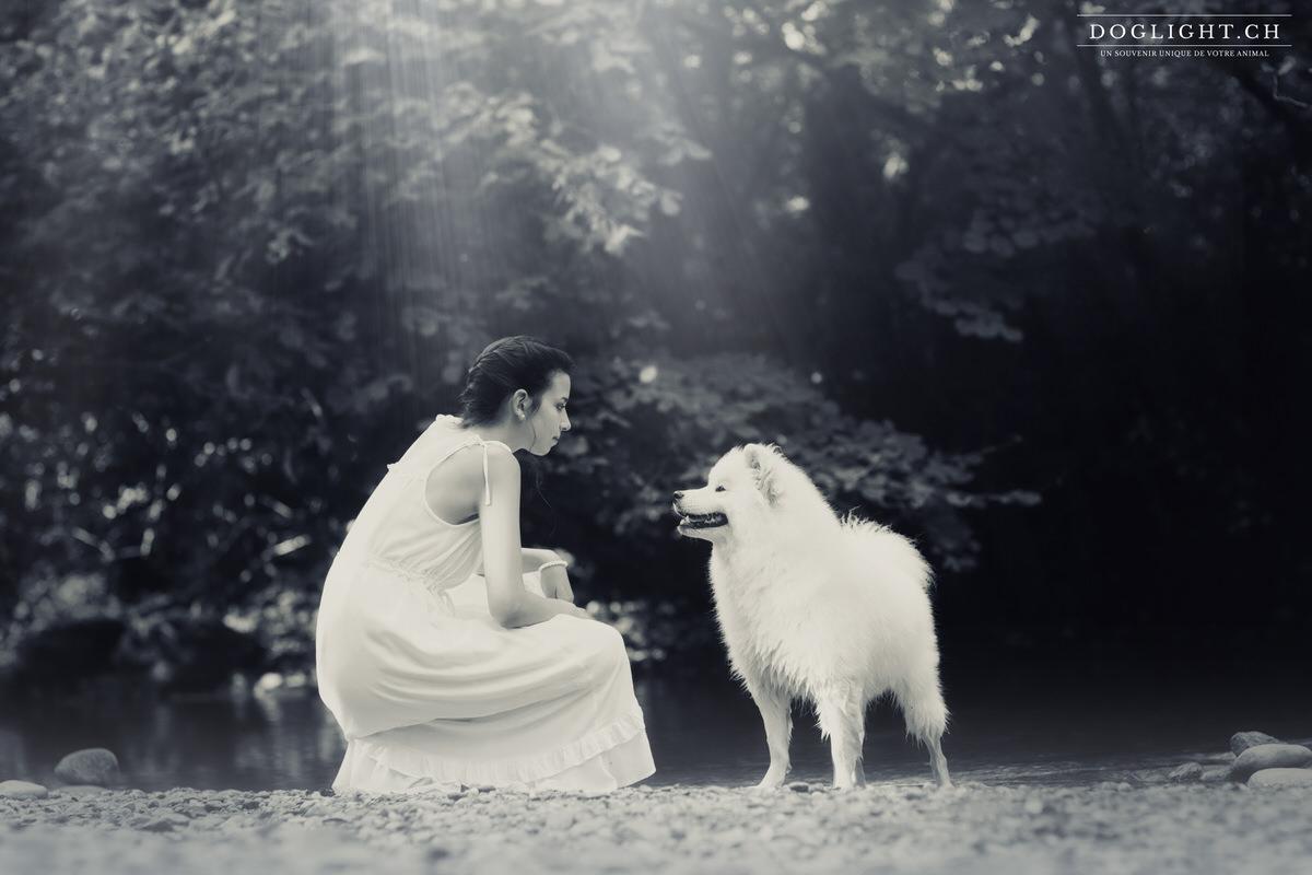 Chien femme Samoyed noir et blanc lumières