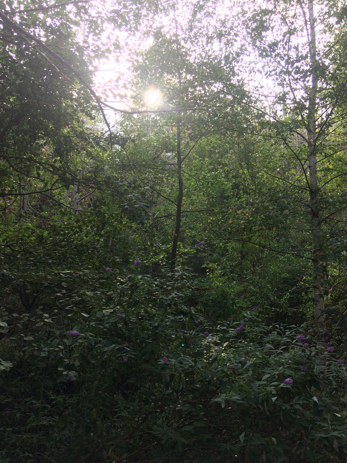 Ressourcement énergétique soins - forêt