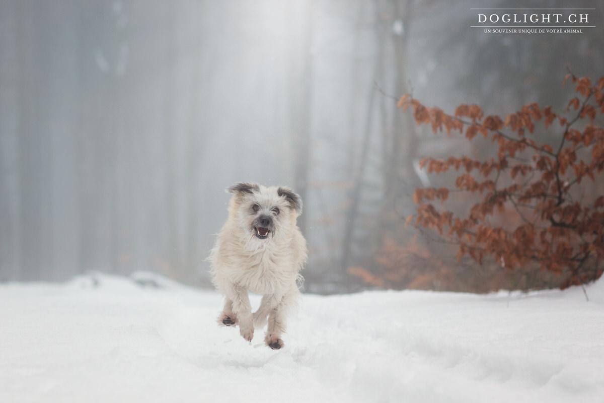 Berger des pyrénées sous la neige
