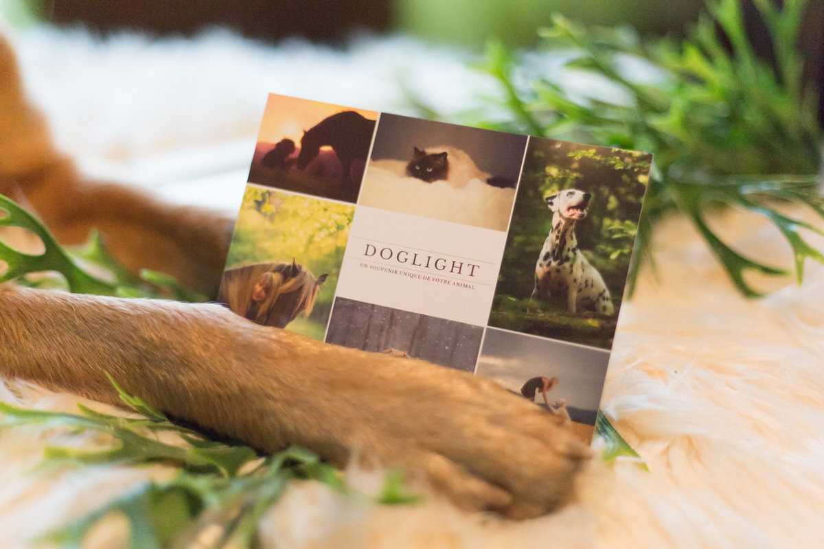 Idée cadeau avec un animal – Un shooting photo ?