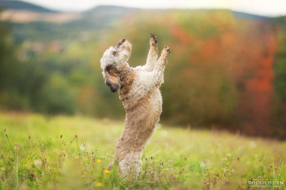 Photo chien basset qui fait le beau
