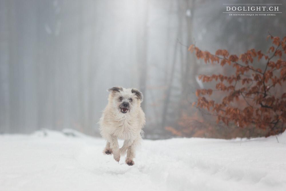 Photos chien dans la neige
