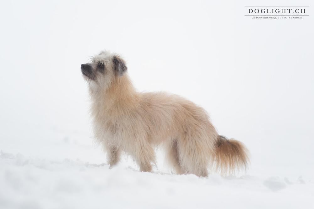 Profil chien dans la neige fond blanc