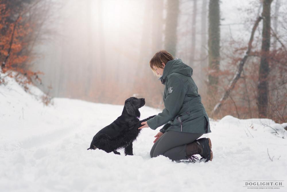 Chien qui donne la patte dans la neige / brouillard