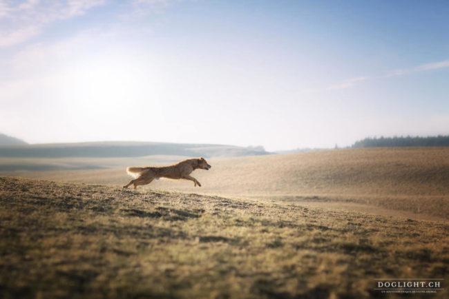 Photographie chien qui court