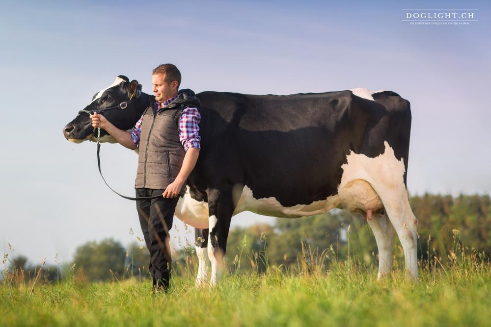 Vache debout et agriculteur
