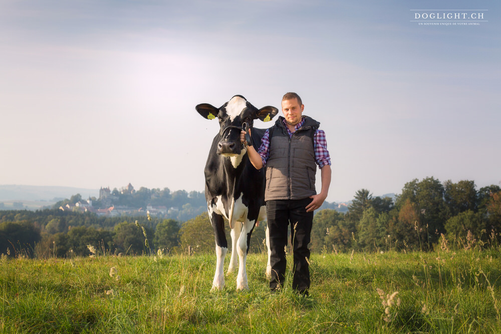 Vache devant le chateau de Bulle / Firbourg