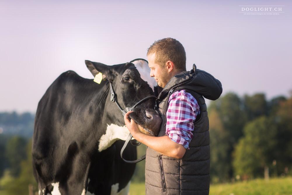 Photographe vache et agriculteur