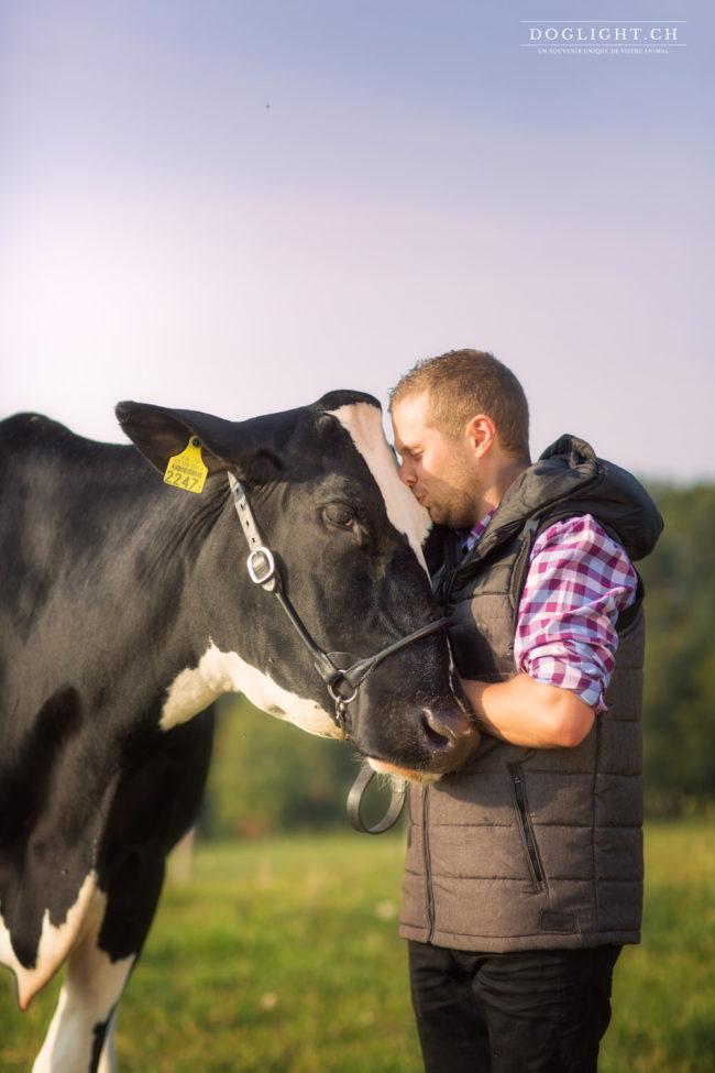 Câlin vache agriculteur