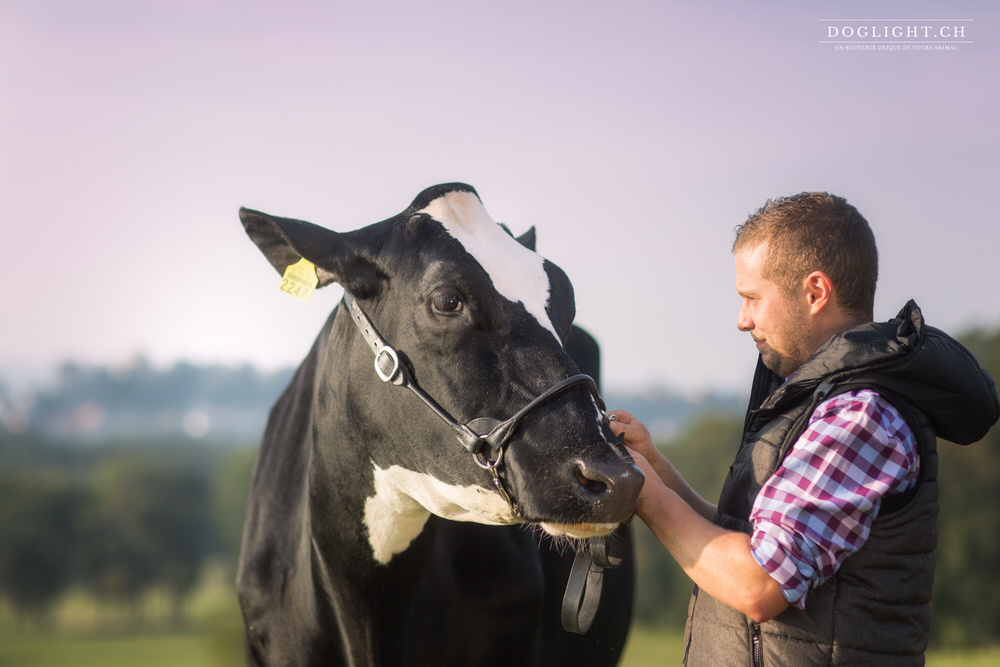Complicité avec une vache