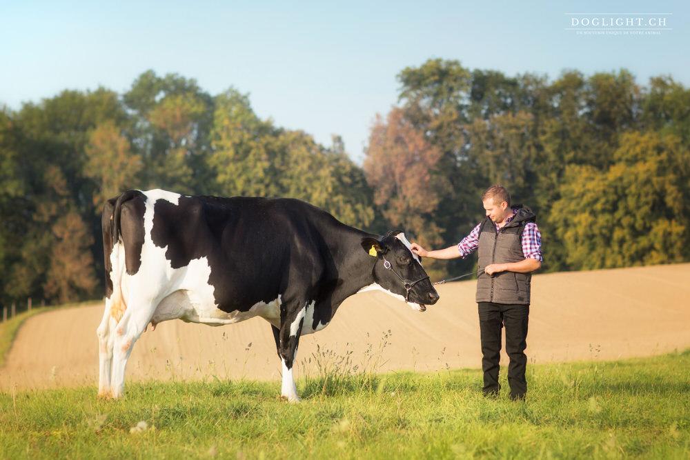 Photo lien vache et homme en Suisse