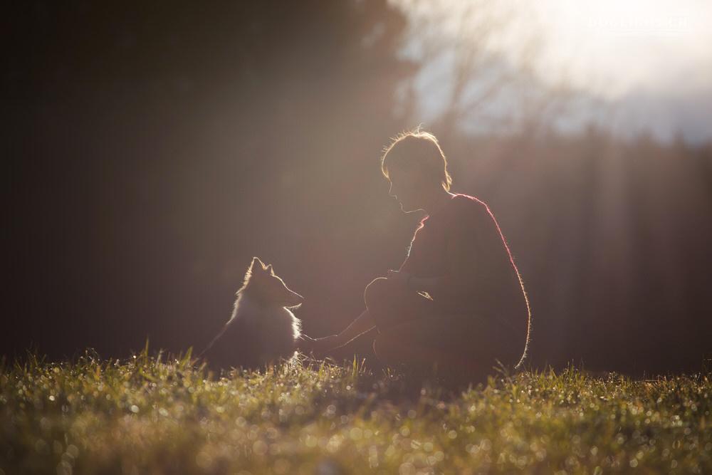 Communication animale humain chien - Thérapeute dans le Jura