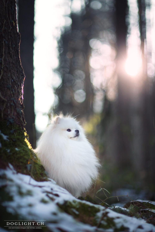 Lumières magique sur petit chien blanc
