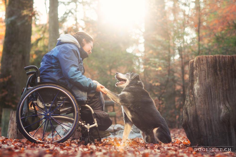 Photo chien personne en chaise roulante complicité