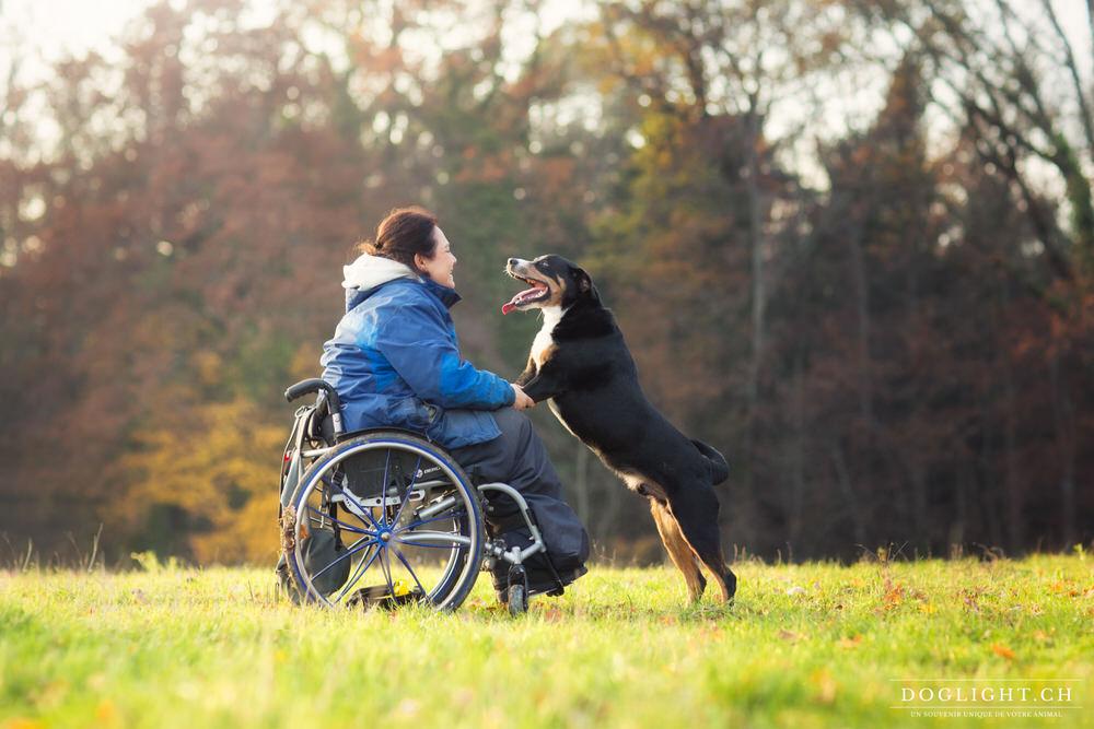 Chien bouvier appenzellois handicap chaise roulante