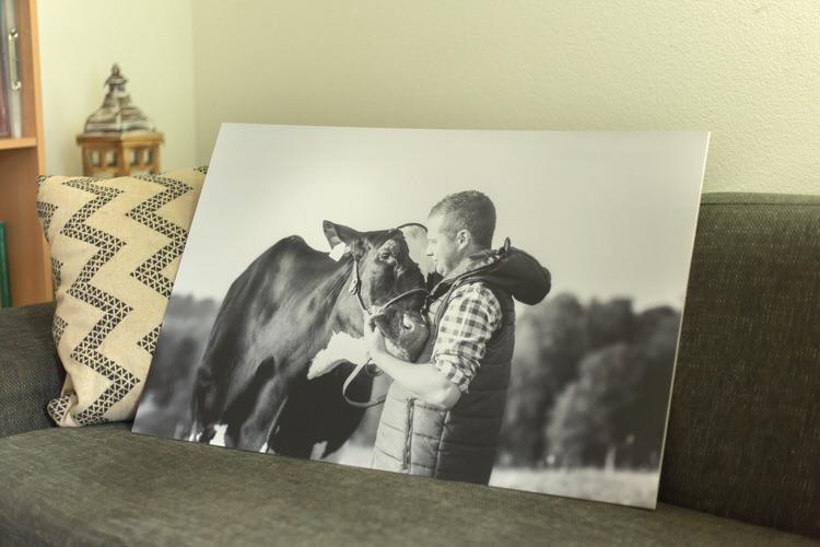 Tableau photo avec son animal vache