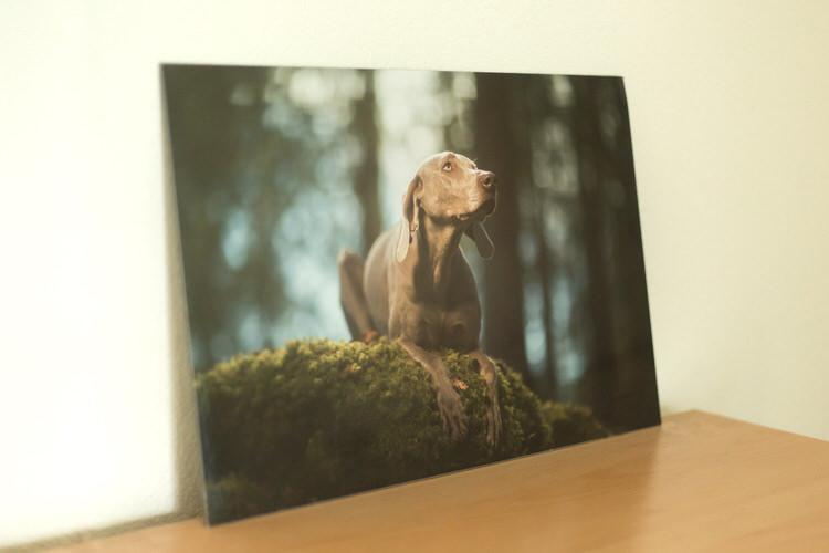 Tableau photographe chien