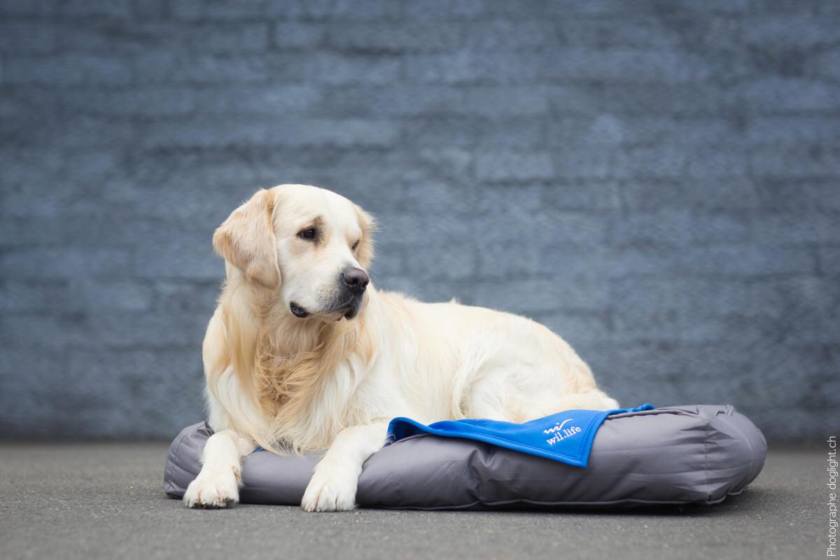 Couverture chien anti-douleur