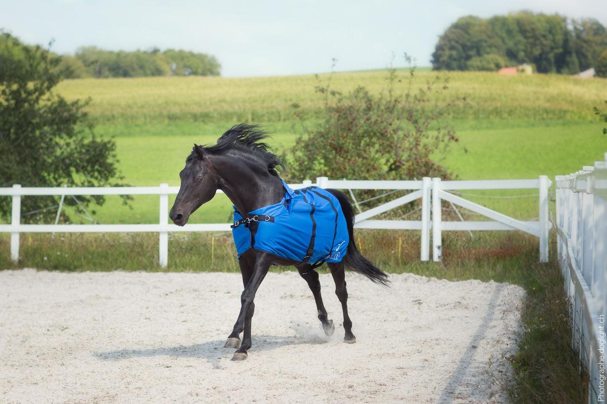 Couverture anti-douleur cheval