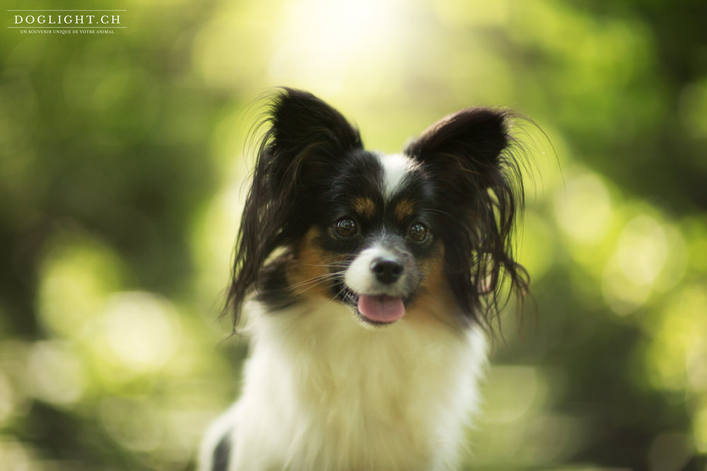 Photographie portrait Papillon - Photographe