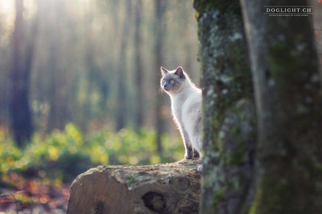 chat dans la lumière extérieur Bulle Fribourg