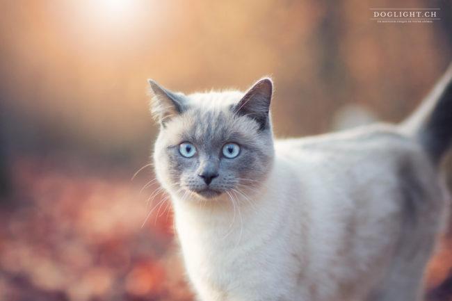 Portrait chat photographe extérieur Bulle Fribourg