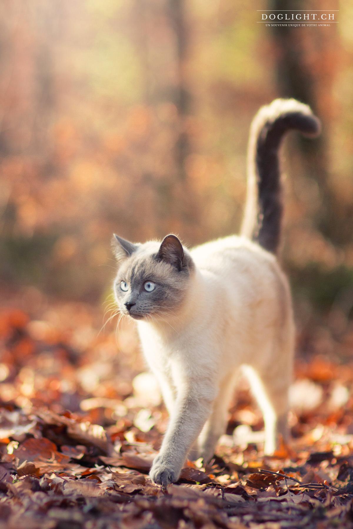 Chat dans les feuilles d'automne