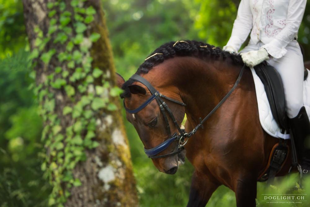 Bijoux équestre cheval Litusanien de dressage