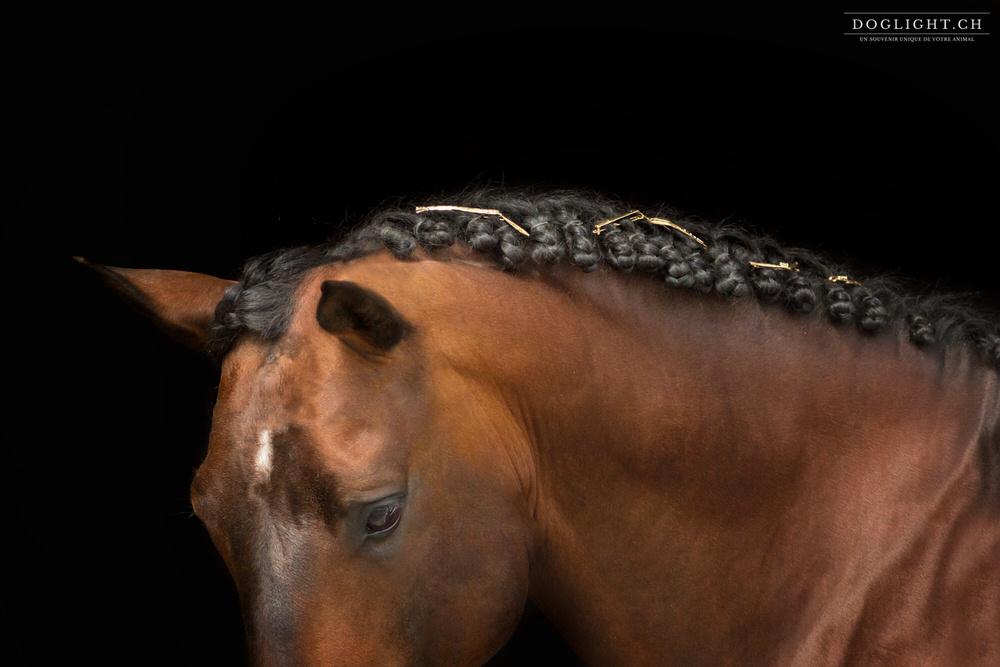Photo studio bijoux équestre crinière tressée cheval