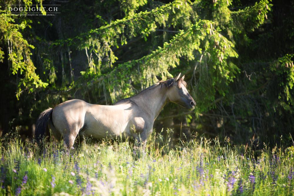 Cheval Quarter Horse gris forêt