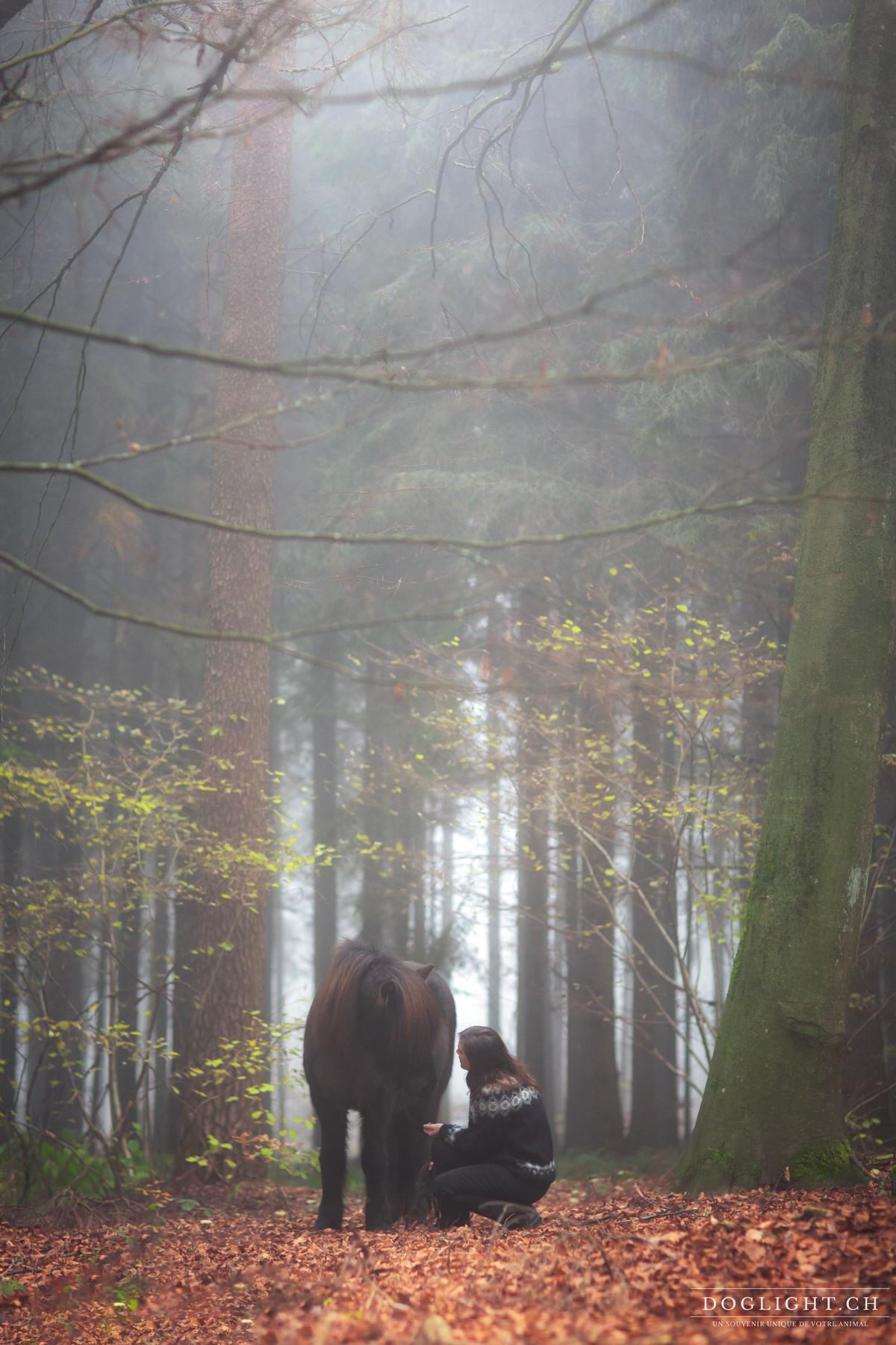 Cheval islandais dans une immense forêt